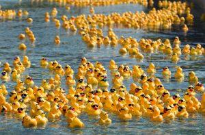 Duck Derby @ Scow Ditch/Centennial Park